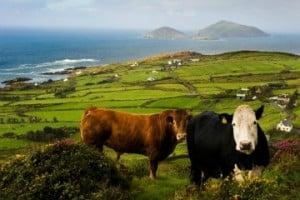 Ring of Kerry, Derrynan Bay - Copy