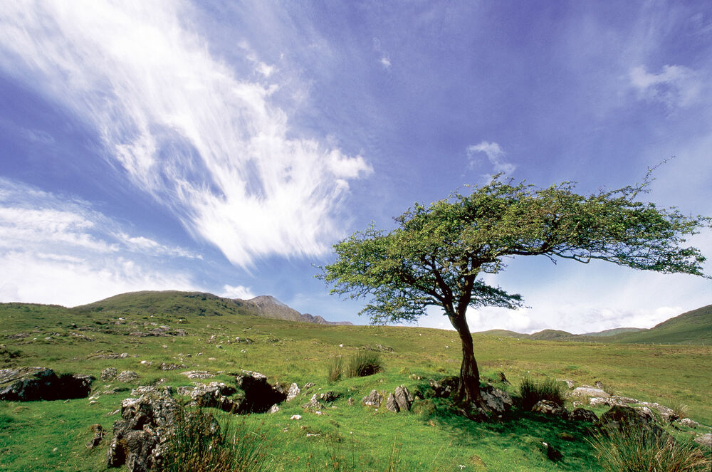 Irish Heritage & Ancestry